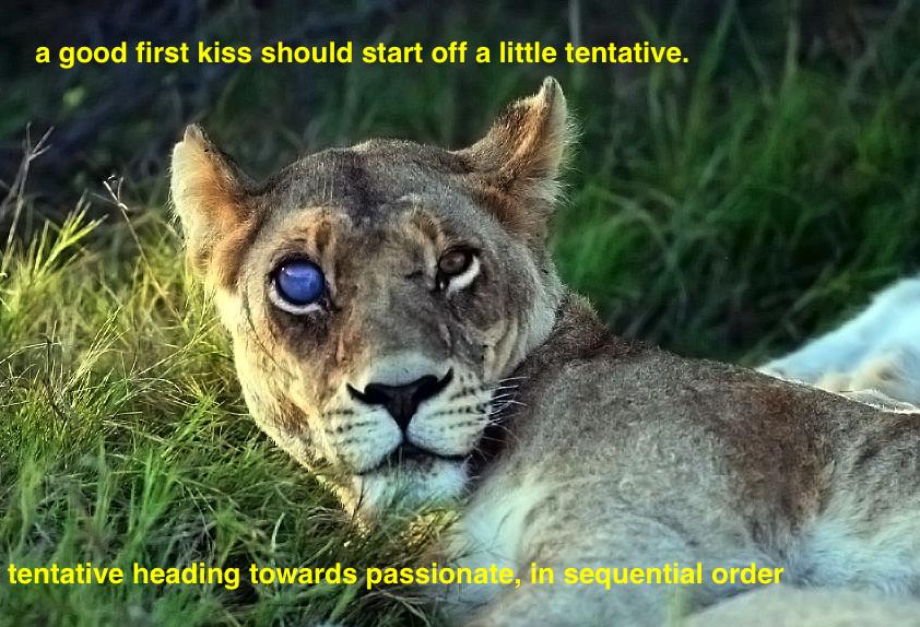 lioness evil eye