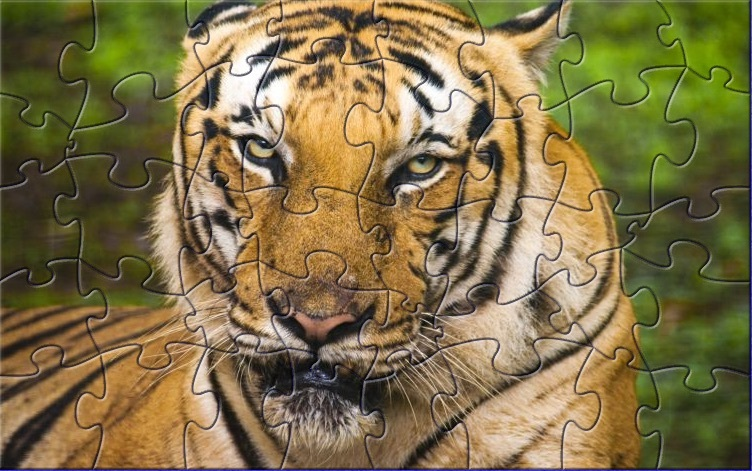 ph-tiger-jigsaw