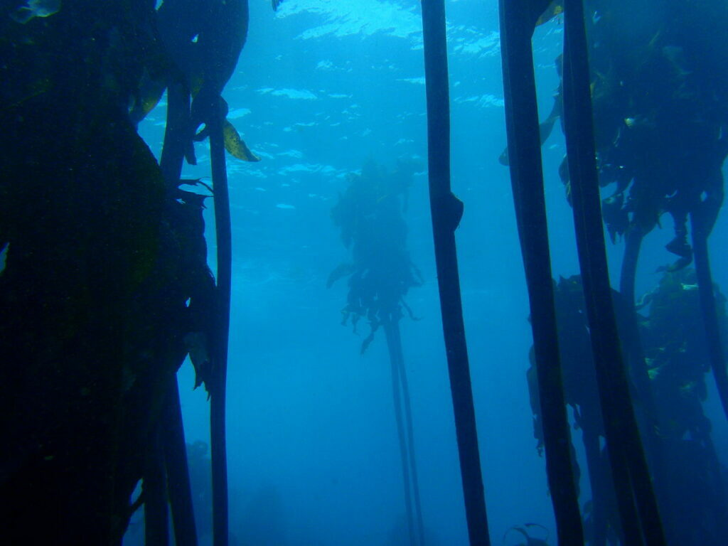 Kelp forest at Strawberry Rocks PC013138 1024x768 - Plague Diary, III